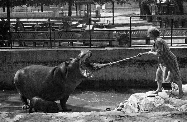 Архивное фото. Московский зоопарк 1944 год.