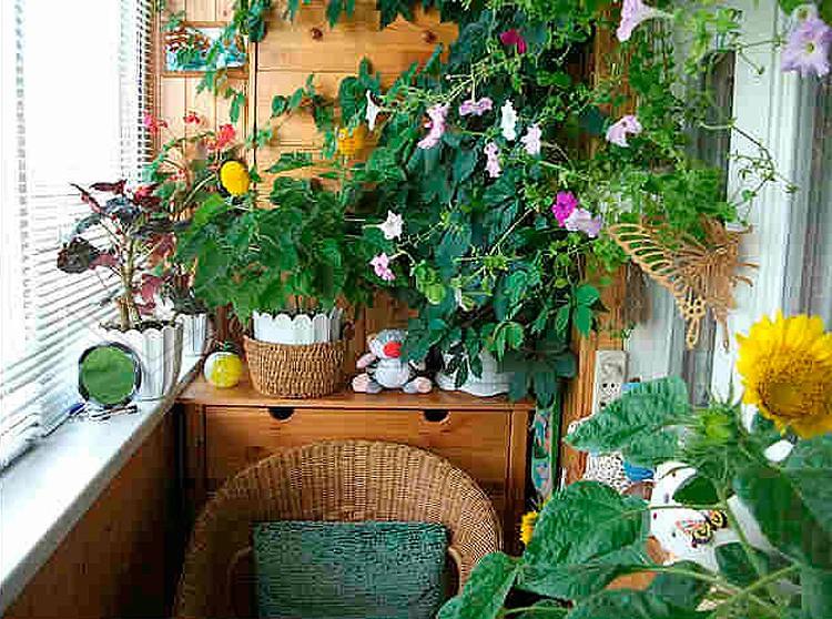 Зимний сад на балконе или домашний оазис своими руками