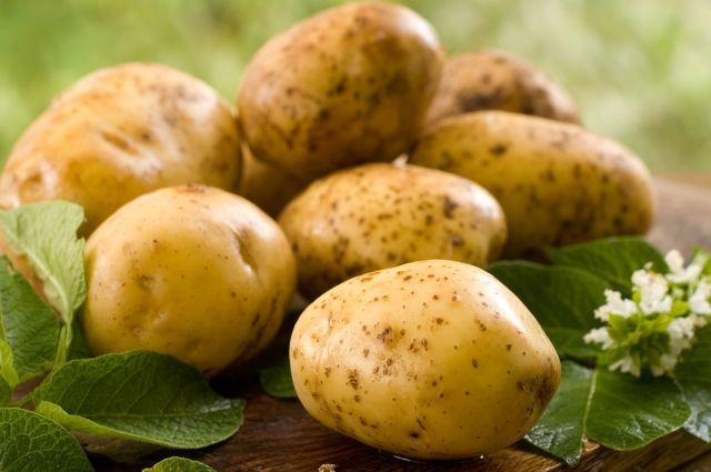 Все дело в крахмале: какой картофель можно жарить, а какой – варить
