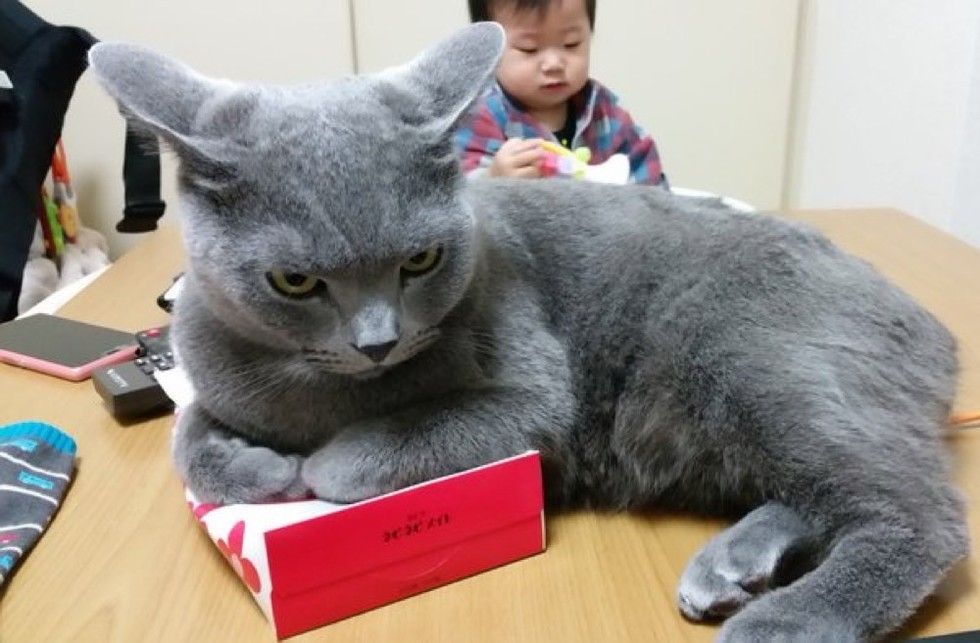 Этому коту нужна коробка для…