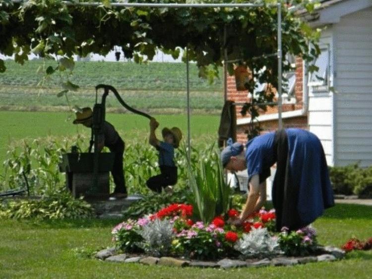 15 интересных фактов об амишах – одном из самых известных религиозных меньшинств