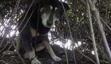 Спасение старенькой и очень недоверчивой собачки
