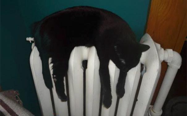 От жары я просто таю! животные, расслабленность, смешно, фото
