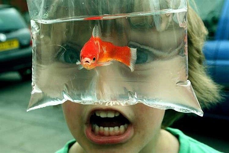 Рисунки, картинки про рыбок смешные