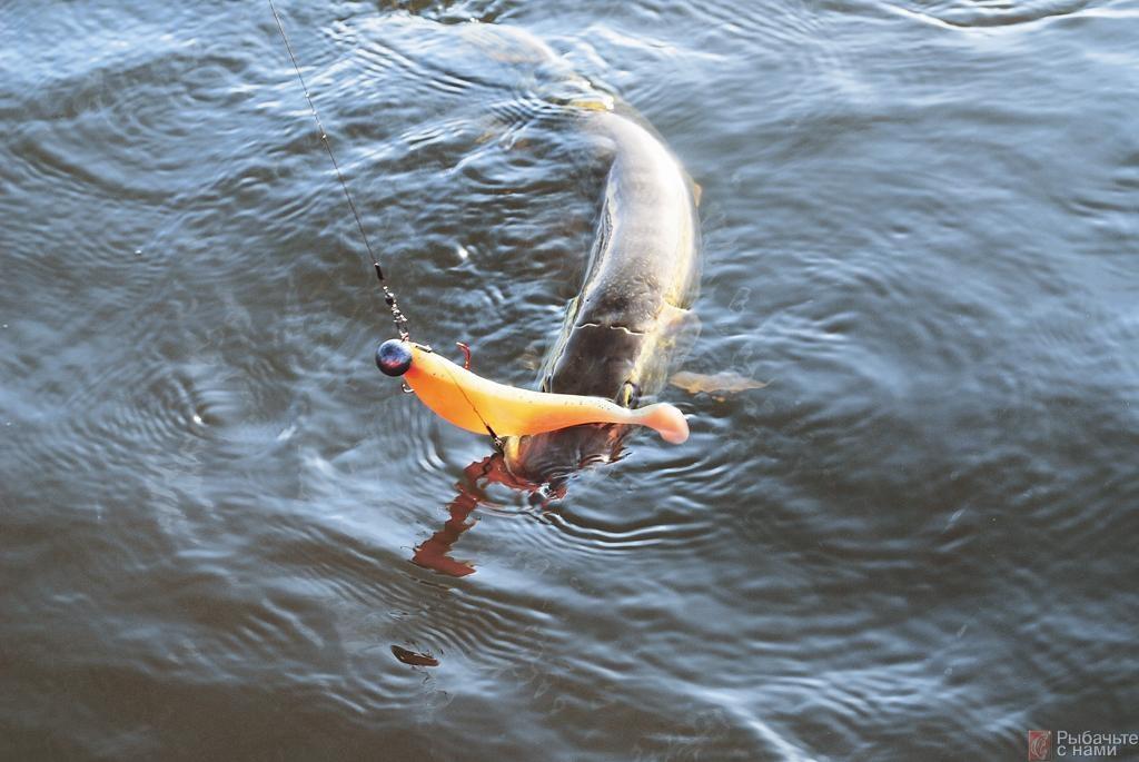 Цветной раздражитель. В некоторые дни рыба ловится только на приманки шокирующих окрасок.