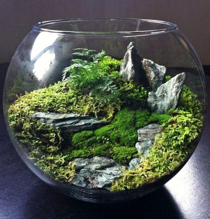 Флорариум из аквариума своими руками 863