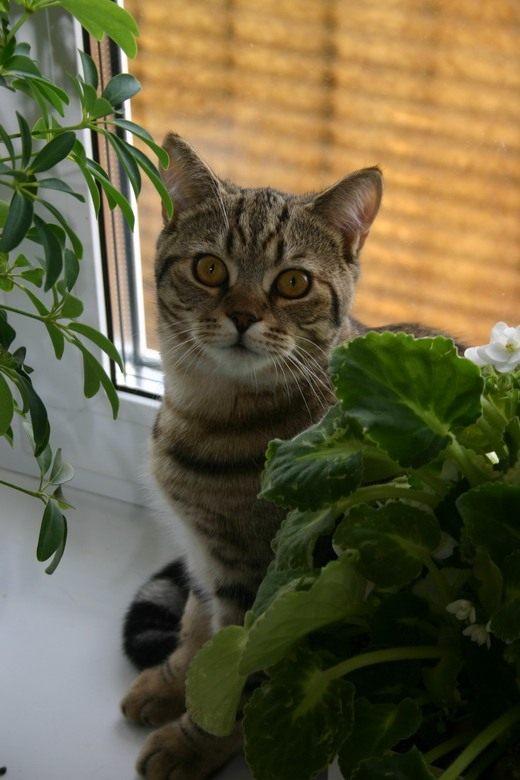 безопасности цветы ядовитые картинки домашние животные девайс для тех