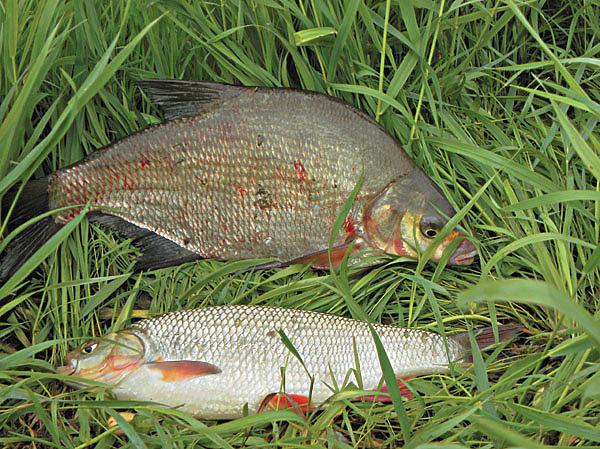 Как ловить рыбу в дождливое лето