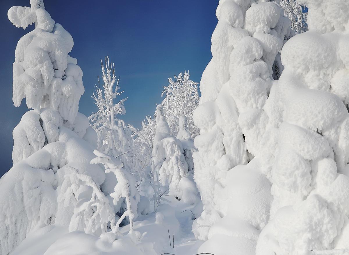 главное, фото красивых зимних уголков эксплуатирующие