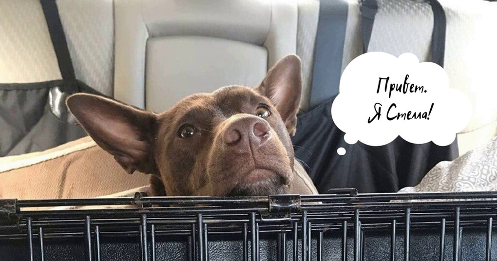Собаку научили 29 словам. Теперь она разговаривает с хозяевами