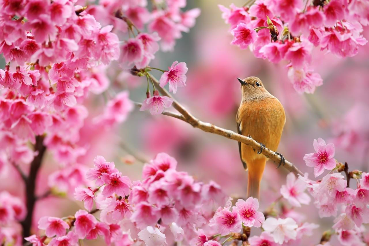 Интересные картинки весна