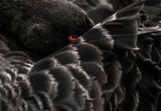 Мир глазами победителей конкурса National Geographic Photo Contest 2018