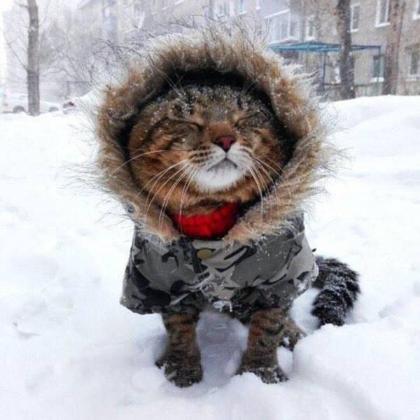 транспортная приколы картинки зима пришла удивительно