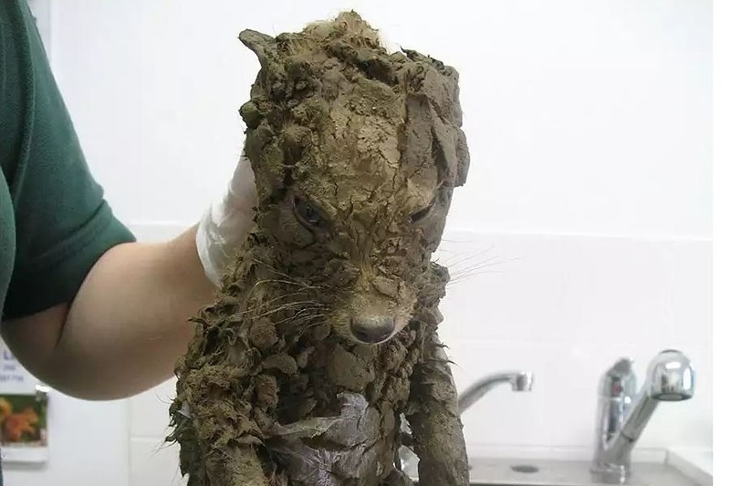 Таинственное животное: его не могли идентифицировать, пока не помыли...