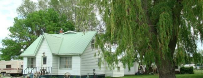 Какое дерево посадить во дворе частного дома