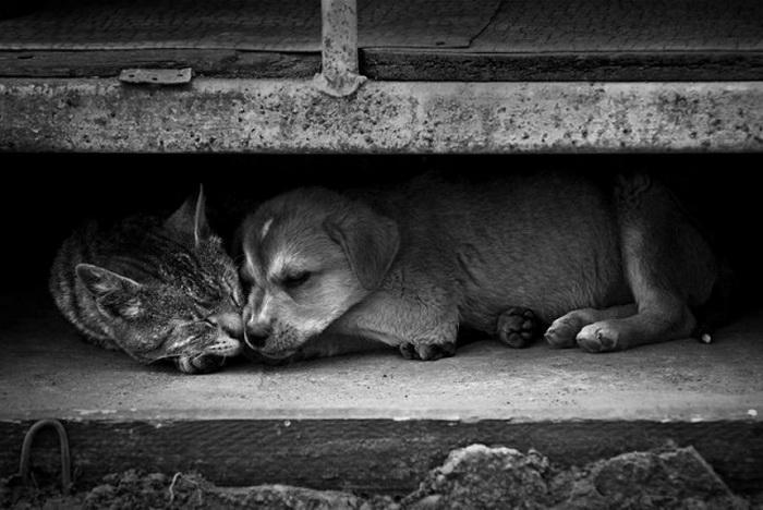 картинки с брошенными животными сегодня