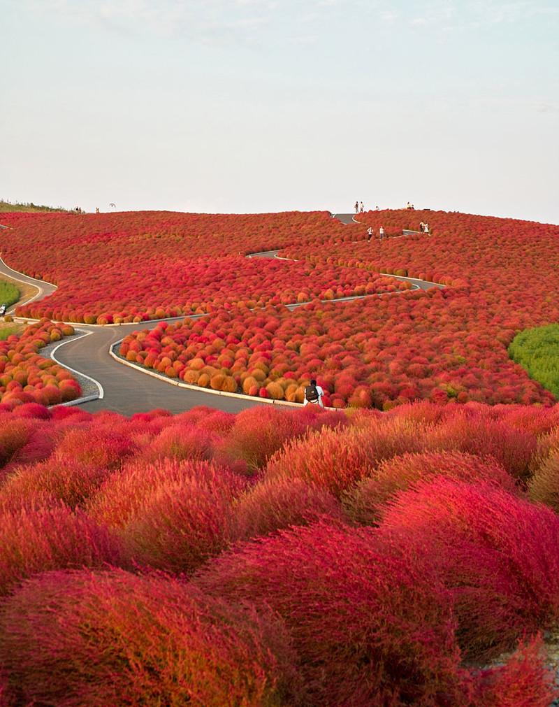 Национальный парк Хитачи в Японии красивые места, красота, невероятные места, фото