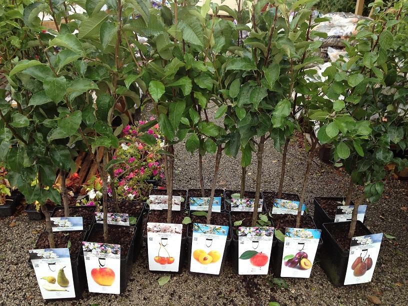 Картинки по запросу где купить саженцы плодовых деревьев