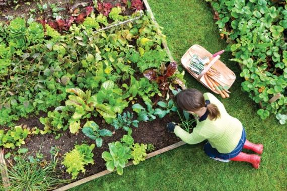Потерянные советы по садоводству столетней давности: актуально и сегодня!