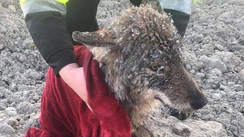Мужчины вытащили из ледяной воды замерзшую собаку. Но когда отвезли ее к ветеринару, их поджидал сюрприз.