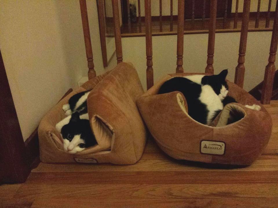 Фото котов, логику которых не понять Хозяевам, достаточно, забавныеИсточник, получаются, ситуации, фотографии, неизвестно, голове, творится, понять, точно, людям, котов, Логику, считается, всегда, понимания, этого, играть, кусаться