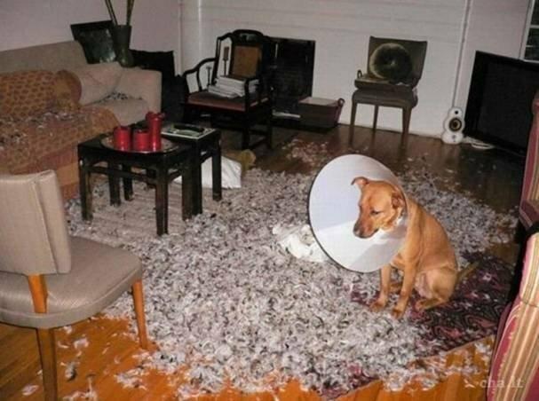 А не надо было на меня эту штуку надевать! врасплох, кошки, смешные, собаки, фото, шкодники