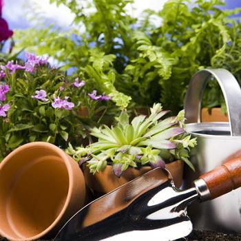 Как поливать цветы зимой и признаки их гибели