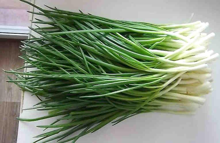 Выращивание зеленого лука без земли