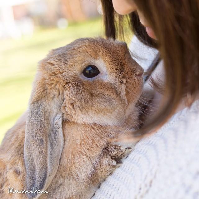 PuiPui — самый стильный кролик в мире