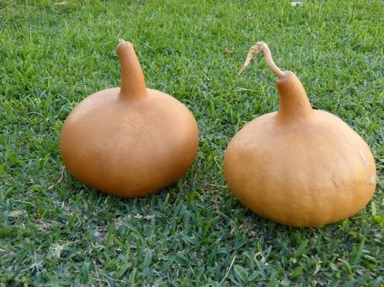 Как сделать посуду и сувениры из лагенарии