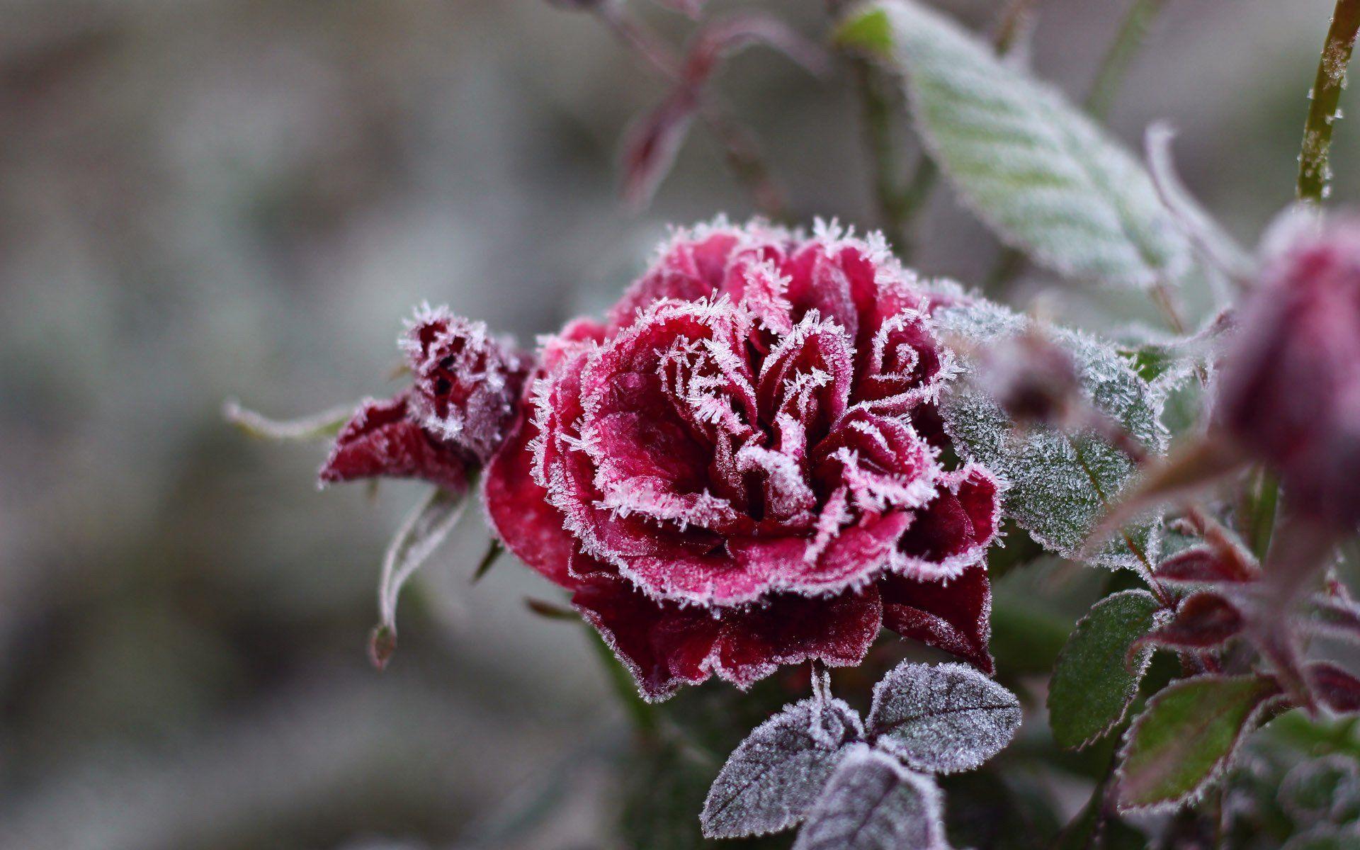 вас зимние цветы названия и фото можно сделать