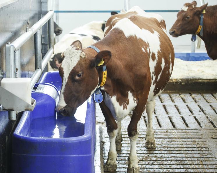 Молочной отрасли грозят банкротства