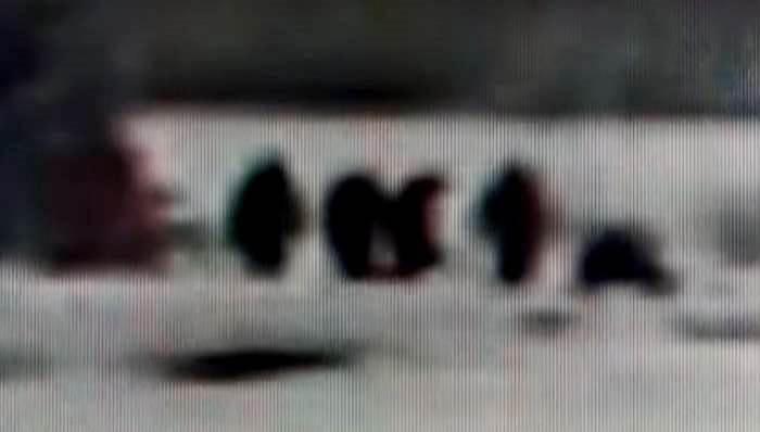На видео из Йеллоустонского парка возможно были засняты шесть бигфутов