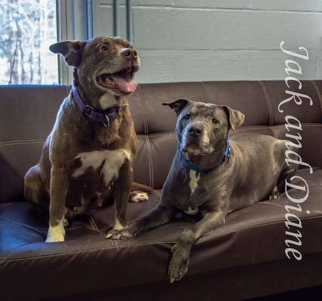 собаки на диване