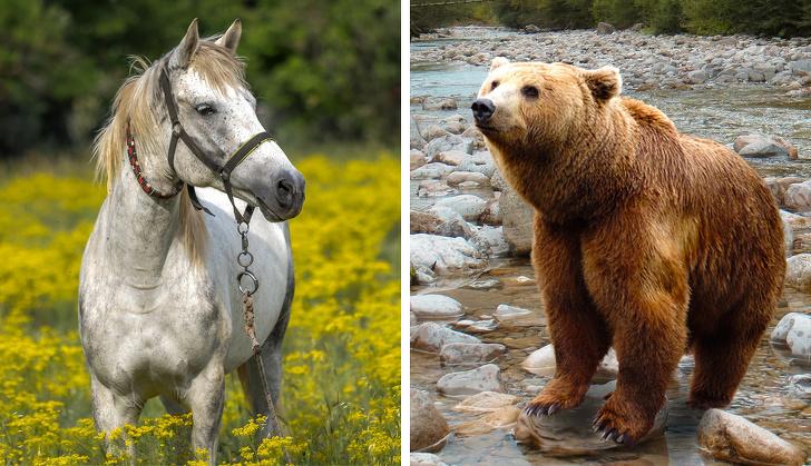 Малоизвестные факты о животных