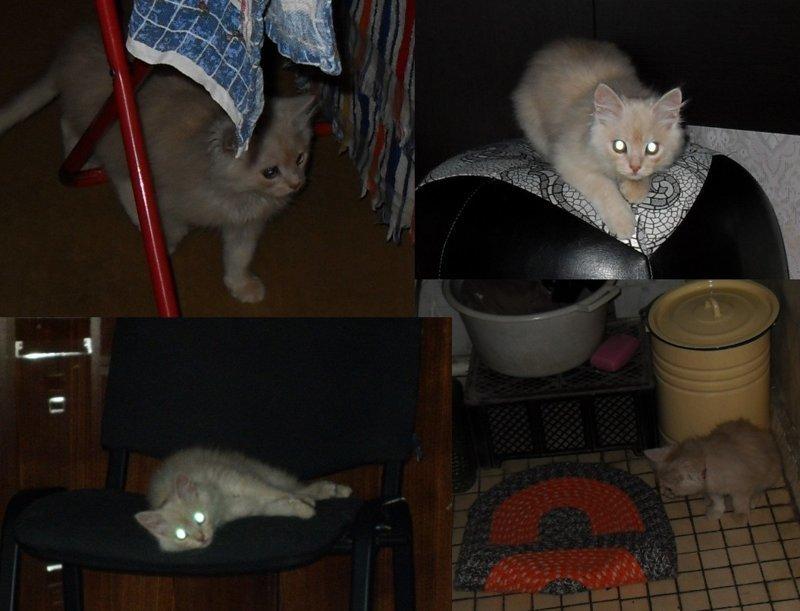 Ночная жизнь кошки, питомцы, собаки