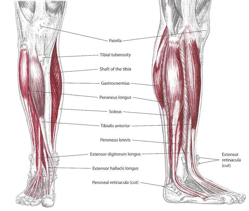 Эти упражнения избавят от судорог и мышечных спазмов