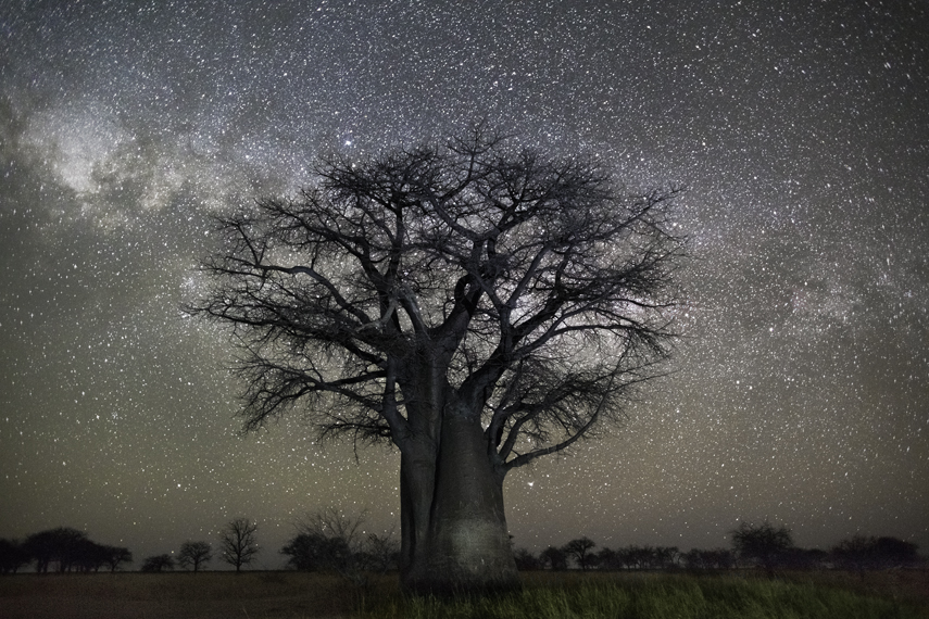 как сфотографировать деревья уходящие в небо покупайте продавайте авто