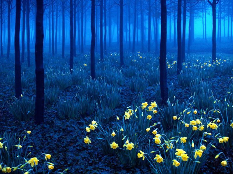 Шварцвальд (Черный лес), Германия красивые места, красота, невероятные места, фото