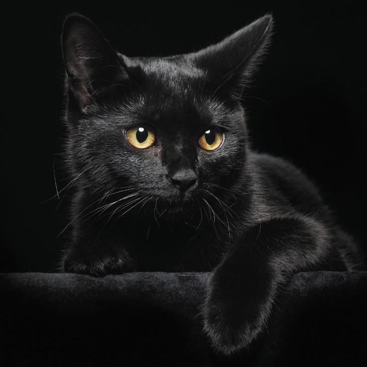 История о мести чёрного кота доказательства
