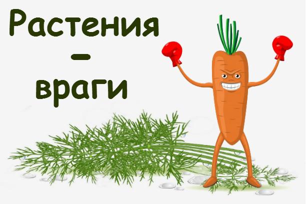 Какие растения нельзя сажать друг с другом или Растения-враги