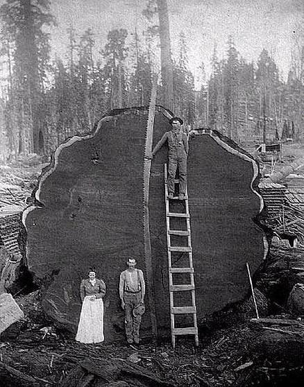 """""""На Земле лесов нет!""""  -  это почти доказано... Не может быть"""