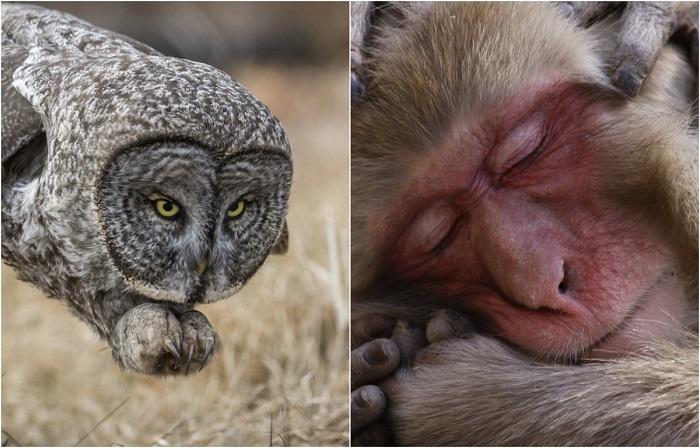 20 фотографий дикой природы, названные лучшими жюри конкурса National Geographic
