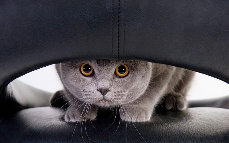 Как избавиться от кошачьих меток в квартире