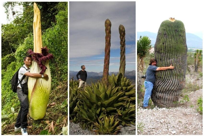 Истинные размеры некоторых растений интересное,природа,растения