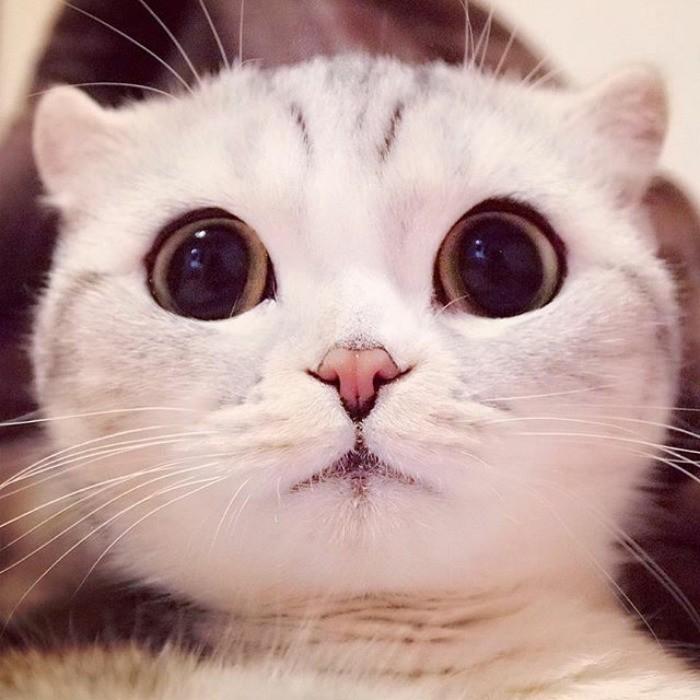 зрелыми фото кошек красивых с большими глазами молодости лана жила