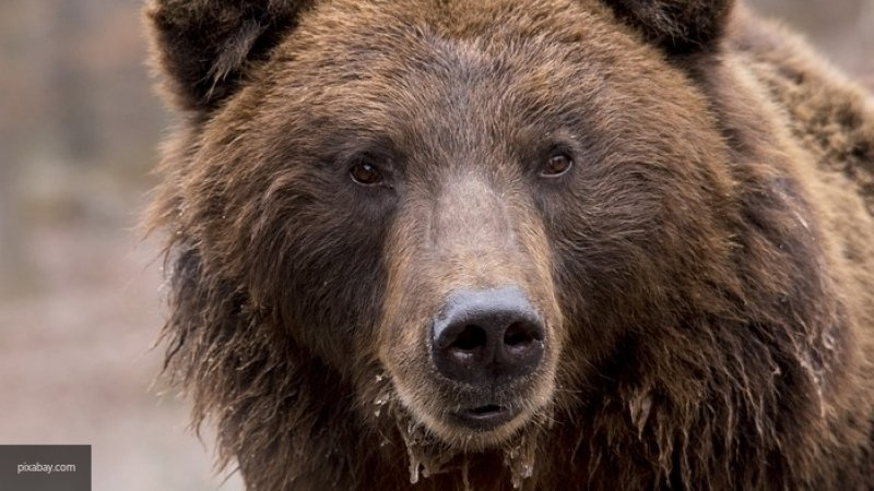 Медведь впал в спячку на складе поликлиники в Японии