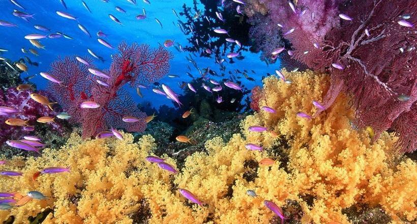 Бессмертие существует: в океане обитают животные, способные жить вечно