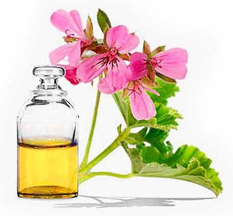 Эфирное масло герани - свойства и применение