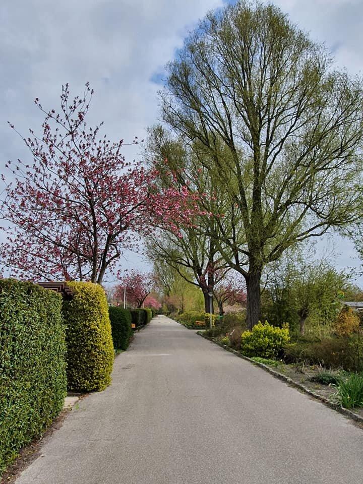 Как выглядят голландские дачи. Их отличие от русских где и как,дача,кто,сад и огород